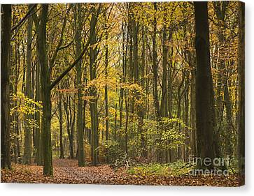 Autumn Gold Canvas Print by Anne Gilbert