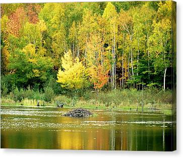 Autumn Gold Canvas Print by Gene Cyr