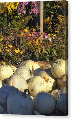 Autumn Gourds Canvas Print by Joann Vitali