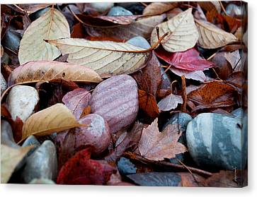 Autumn Greatness Canvas Print by Gwyn Newcombe