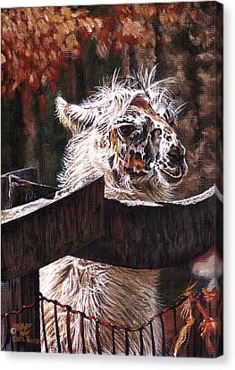Llama Canvas Print - Autumn Greeting by Cara Bevan