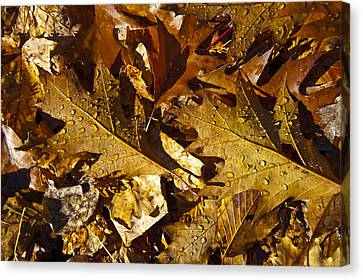 Autumn Groundcover Canvas Print