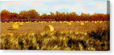 Autumn Hay Canvas Print by Ric Darrell