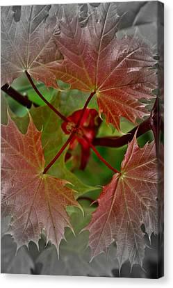 Autumn Canvas Print by Henry Kowalski