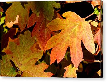 Autumn Hues Canvas Print by Living Color Photography Lorraine Lynch