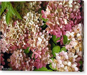 Autumn Hydrangeas Canvas Print