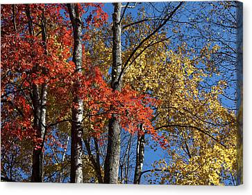 Autumn II Canvas Print