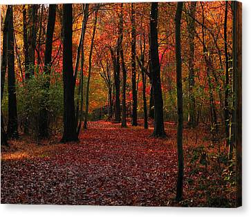 Autumn IIi Canvas Print by Raymond Salani III