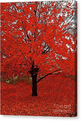 Red Tree Impressions #1 Red Canvas Print