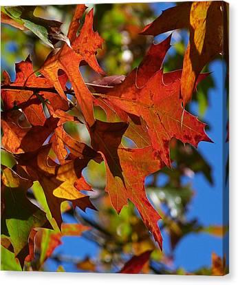 Autumn In Australia Canvas Print by Margaret Saheed