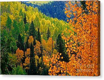 Autumn In Colorado Canvas Print by Richard and Ellen Thane