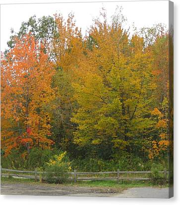 Autumn In Maine Canvas Print by Patricia E Sundik
