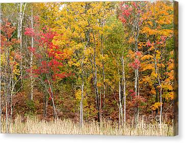Autumn In Muskoka Canvas Print by Les Palenik