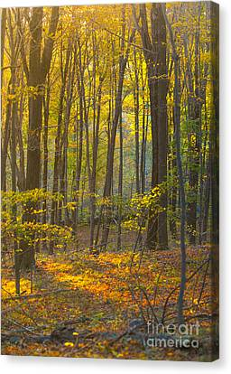 Autumn In New England Canvas Print by Diane Diederich