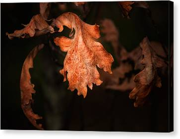 Autumn Is In The Air Canvas Print by Tom Mc Nemar