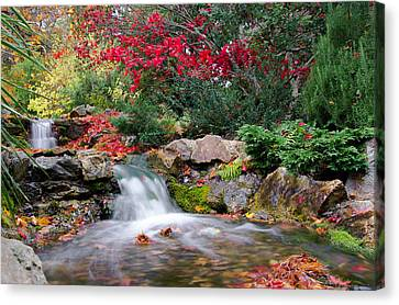 Autumn In The Botanic Gardens Canvas Print by Martina Fagan