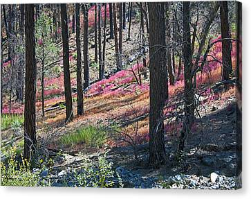 Autumn In The Bradshaw Mountains 2 Canvas Print by Phil Balcastro
