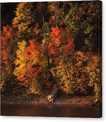 Autumn In The Ozarks Canvas Print by Greg Kopriva