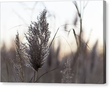 Canvas Print featuring the photograph Autumn In The Tall Grass by Andrew Pacheco