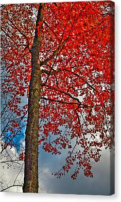 Autumn In The Trees Canvas Print by David Patterson