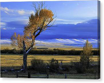 Autumn In Wyoming Canvas Print