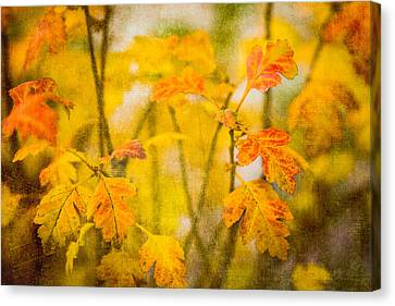 Autumn In Yellow Canvas Print by Alexander Senin