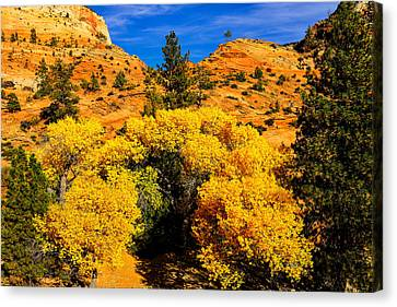 Canvas Print featuring the photograph Autumn In Zion by Greg Norrell