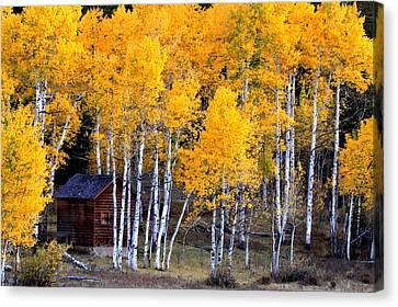 Autumn Inn Canvas Print by Darryl Wilkinson