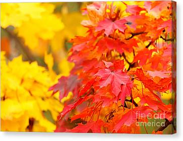 Autumn Is Beautiful Canvas Print