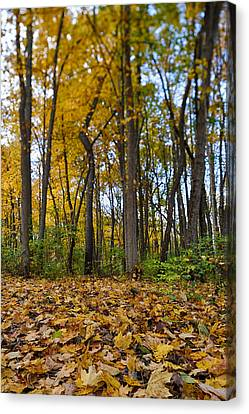 Maple Canvas Print - Autumn Is Here by Sebastian Musial
