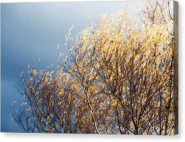 Autumn Is Leaving Canvas Print by Gwyn Newcombe