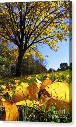 Autumn Landscape Canvas Print by Elena Elisseeva