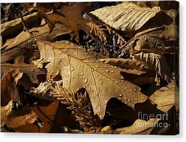 Autumn Leaf At Dawn Canvas Print