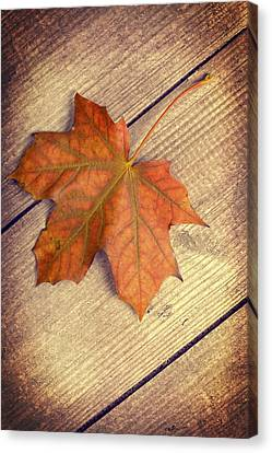 Autumn Leaf Canvas Print by Amanda Elwell