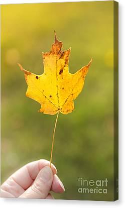 Autumn Leaf Canvas Print by Diane Diederich