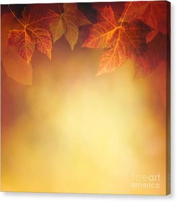 Autumn Leaf Canvas Print by Mythja  Photography
