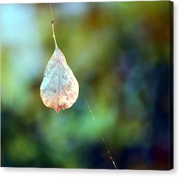 Canvas Print featuring the photograph Autumn Leaf Suspended by Linda Cox