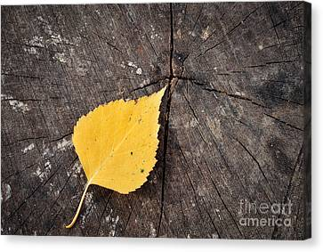 Autumn Leaf Canvas Print by Vadim Boytsov