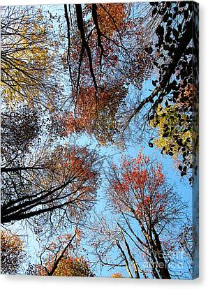 Autumn Leaves 2011 Season Canvas Print by Tina M Wenger