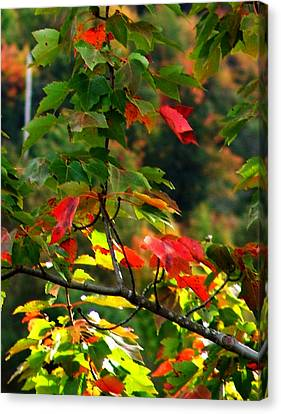 Autumn Leaves At St. Ann's Bay Canvas Print by Janet Ashworth