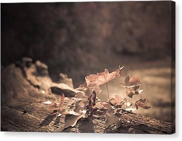 Autumn Leaves Canvas Print by Amanda Elwell