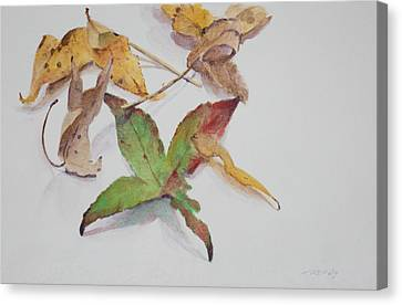 Autumn Leaves Canvas Print by Christopher Reid