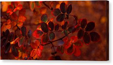 Autumn Leaves, Colorado, Usa Canvas Print by Panoramic Images