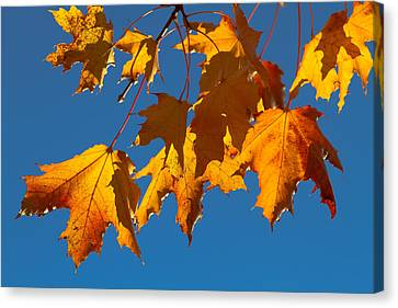Canvas Print featuring the photograph Autumn Leaves by Dennis Bucklin