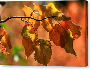 Autumn Leaves Canvas Print by Donna Kennedy