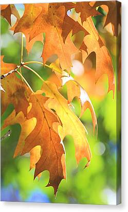 Autumn Leaves Canvas Print by Elizabeth Budd