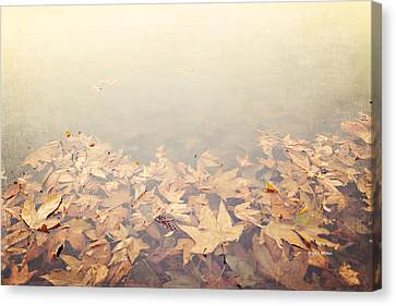 Autumn Leaves Floating In The Fog Canvas Print by Angela A Stanton