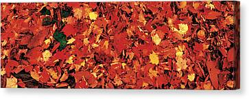 Autumn Leaves Great Smoky Mountains Canvas Print by Panoramic Images
