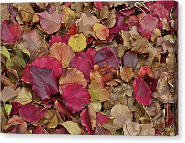 Canvas Print featuring the photograph Autumn Leaves by John Babis