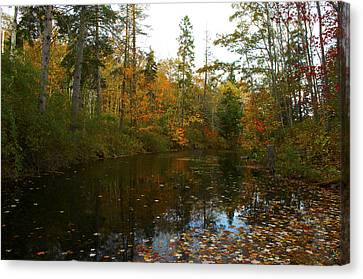 Autumn Leaves Canvas Print by Julie Smith